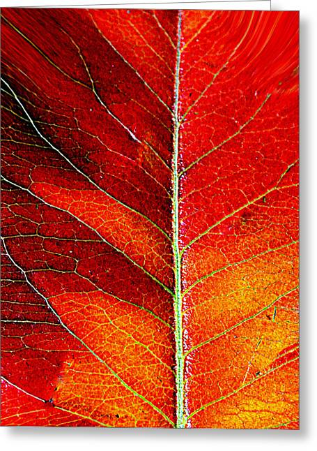 Orange In Autumn.... Greeting Card by Tanya Tanski