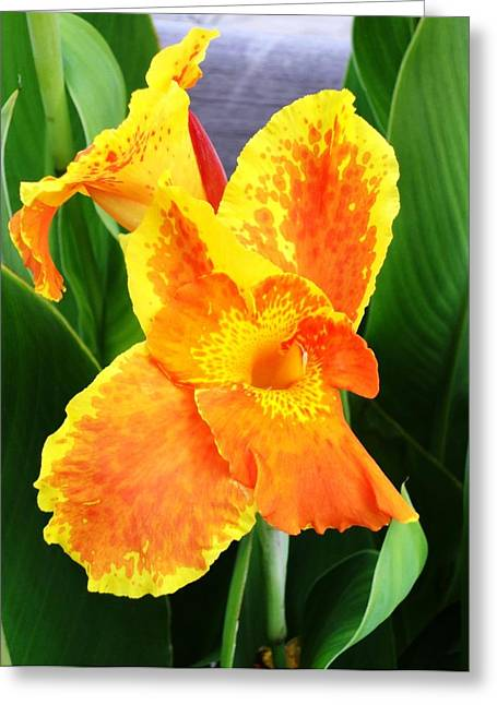 Iris Digital Art Greeting Cards - Orange Iris Greeting Card by Cathie Tyler