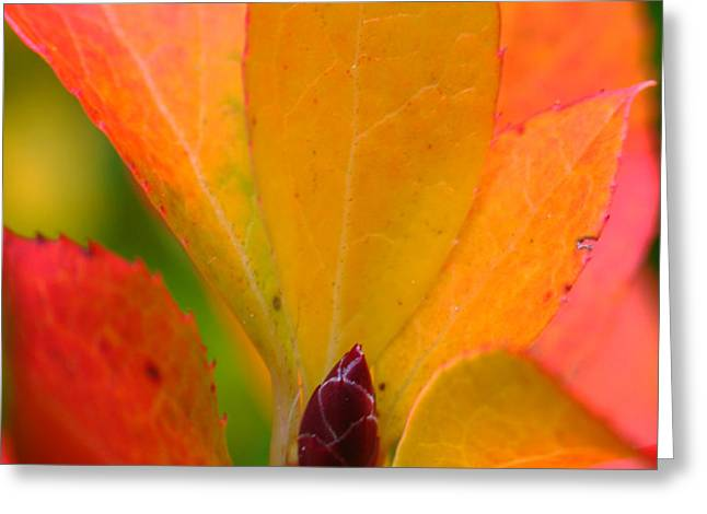 Orange Leaves Greeting Card by Juergen Roth