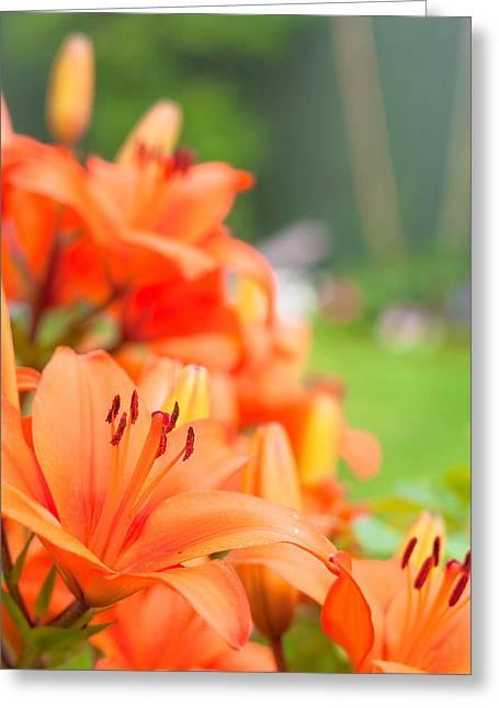 Stamen Greeting Cards - Orange lillies Greeting Card by Tom Gowanlock