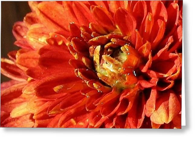 Orange Mum Greeting Card by Bruce Bley
