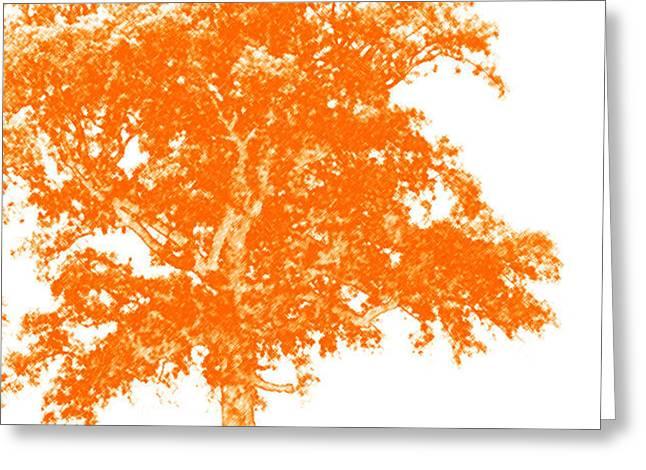 Orange Oak Greeting Card by Alan Look