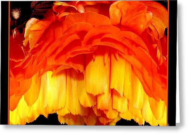 Sofranko Greeting Cards - Orange Ranunculus Polar Coordinate Greeting Card by Rose Santuci-Sofranko