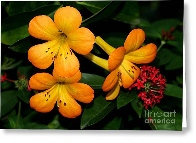 Orange Rhododendron Flowers Greeting Card by Sabrina L Ryan
