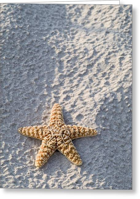 Shell Texture Greeting Cards - Orange seastar laying on sand Greeting Card by Mary Van de Ven - Printscapes