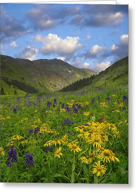 Sneezeweed Greeting Cards - Orange Sneezeweed And Delphinium Greeting Card by Tim Fitzharris