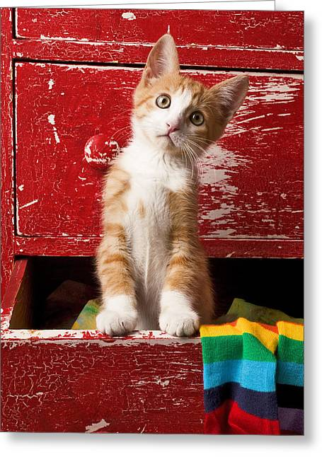 Furniture Greeting Cards - Orange tabby kitten in red drawer  Greeting Card by Garry Gay