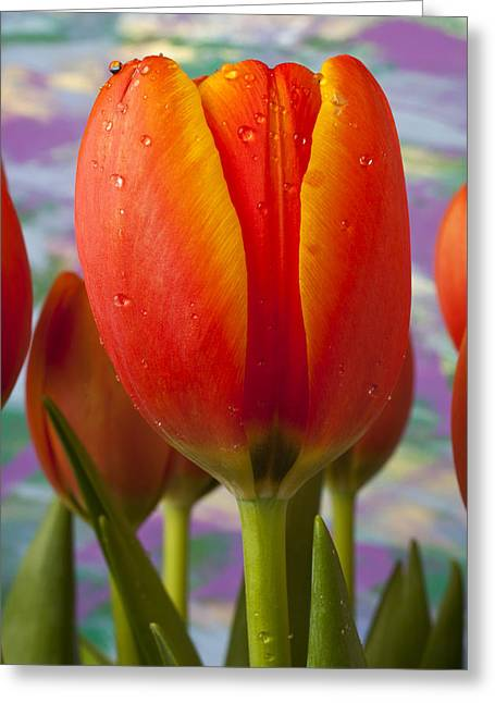 Dew Greeting Cards - Orange Tulip Close Up Greeting Card by Garry Gay