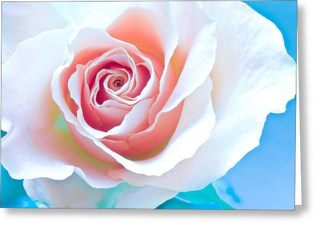Rose Photos Greeting Cards - Orange White Blue Abstract Rose Greeting Card by Artecco Fine Art Photography