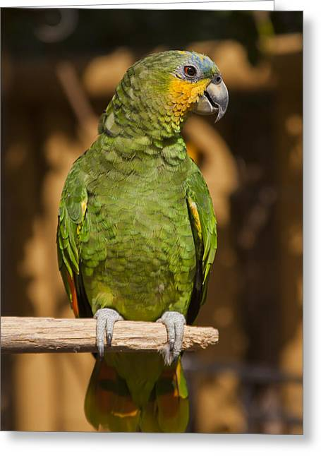 Islamorada Greeting Cards - Orange-winged Amazon Parrot Greeting Card by Adam Romanowicz