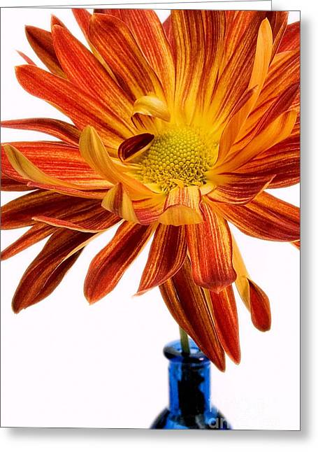 Susan Smith Greeting Cards - Orange You Happy Greeting Card by Susan Smith