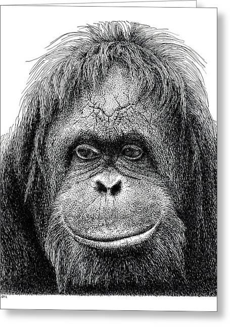 Orangutan Drawings Greeting Cards - Orangutan Greeting Card by Scott Woyak