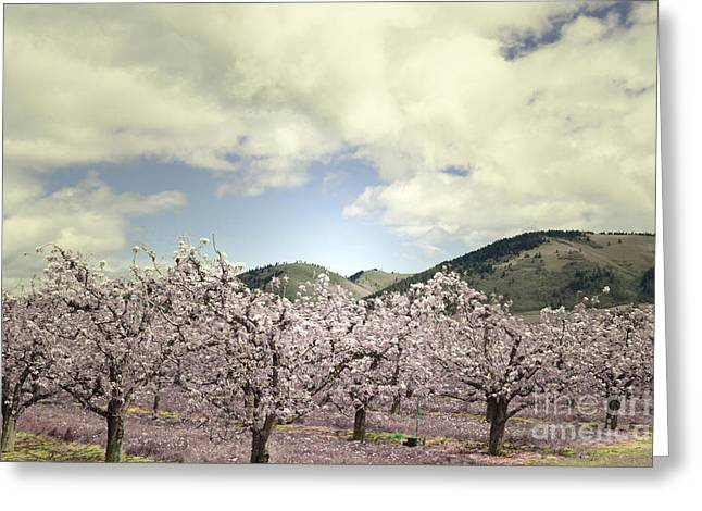 Pastel Mountains Prints Greeting Cards - Orchard Bloom Greeting Card by Andrea Hazel Ihlefeld