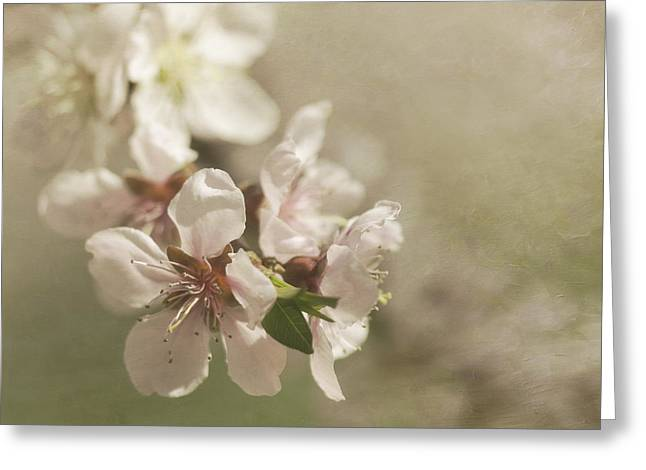 Peaches On A Tree Greeting Cards - Orchard in Spring Greeting Card by Cheryl Butler