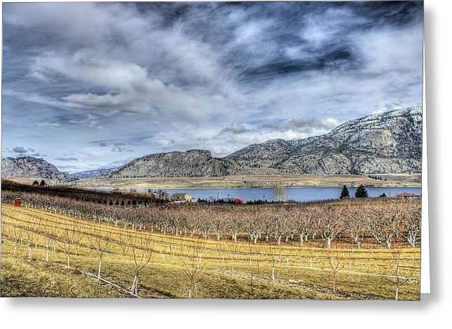 Orchards And Vineyards Greeting Card by John  Greaves