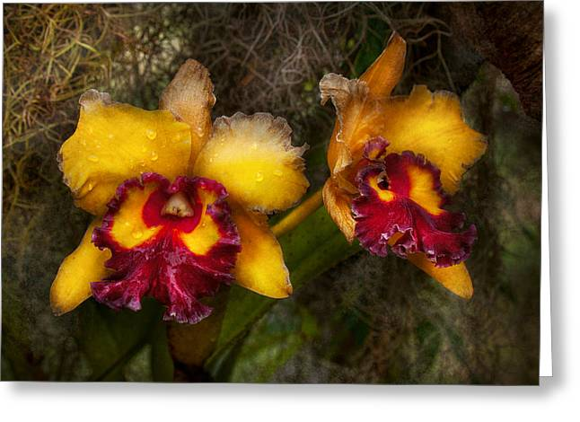 Cattleya Greeting Cards - Orchid - Cattleya - Dripping with passion  Greeting Card by Mike Savad