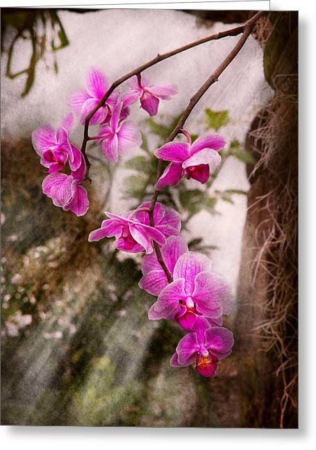 Orchid Artwork Greeting Cards - Orchid - Tropical Passion Greeting Card by Mike Savad