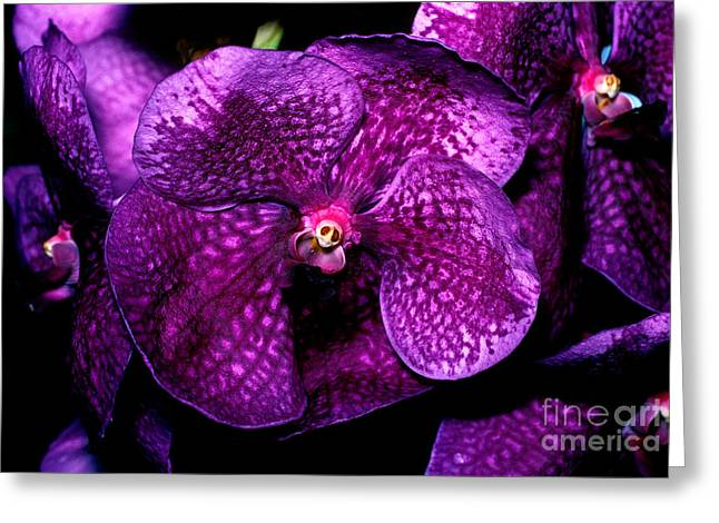Cattleya Greeting Cards - Orchid 11 Greeting Card by Terry Elniski