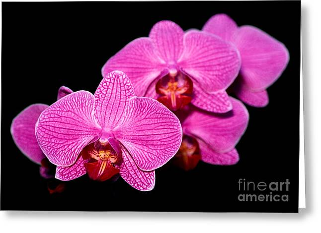 Cattleya Greeting Cards - Orchid 17 Greeting Card by Terry Elniski