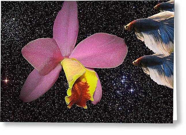 Betta Greeting Cards - Orchid and Bettas Greeting Card by Neal Wiseman