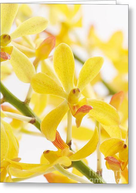 Orchid Bunch Greeting Card by Atiketta Sangasaeng