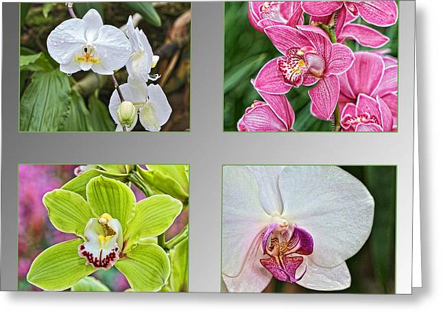 Colorful Orchid Greeting Cards - Orchid collage Greeting Card by Theo Tan