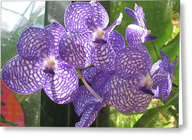 Orchid Greeting Card by Darren Stein