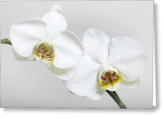 Flower Photos Pyrography Greeting Cards - Orchid Greeting Card by Falko Follert