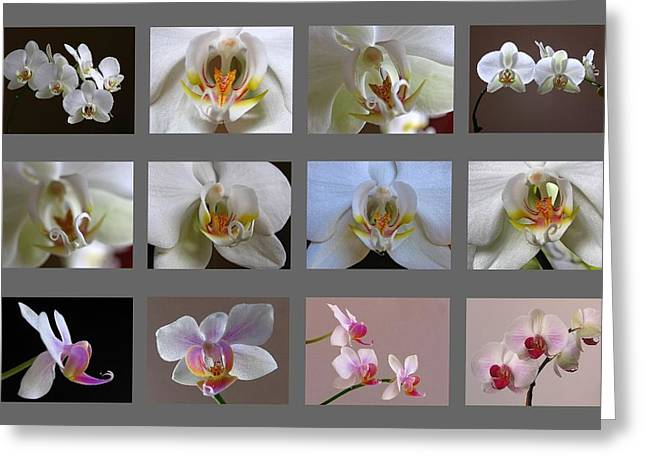 Artwork Flowers Greeting Cards - Orchid Fine Art Collection Greeting Card by Juergen Roth