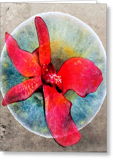Edmonton Photographer Greeting Cards - Orchid Of Oceans  Greeting Card by Jerry Cordeiro