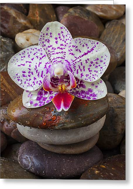 Orchid On Stack Of Rocks Greeting Card by Garry Gay