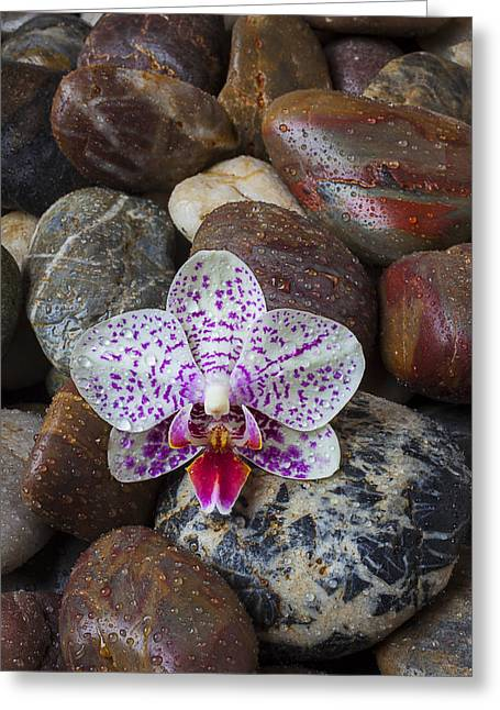 Orchid On Wet Rocks Greeting Card by Garry Gay