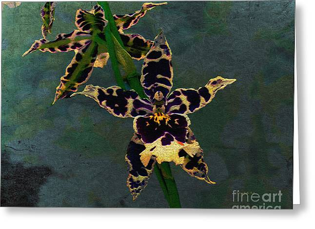 Tropical Rainforests Mixed Media Greeting Cards - Orchid Study II Greeting Card by Patricia Griffin Brett