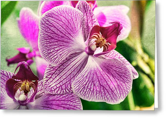 Flowering Plant Greeting Cards - Orchid Textures Greeting Card by Peter Chilelli