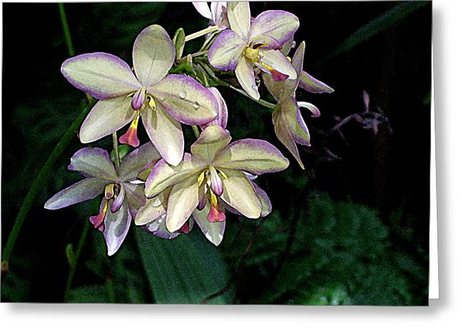 Unexpected Quality Greeting Cards - Orchidaceae Greeting Card by Don  Wright