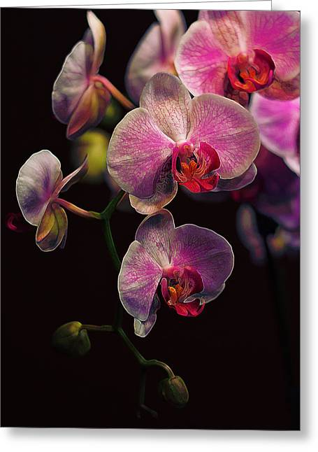 Monocots Greeting Cards - Orchidaceae Gravitas Greeting Card by Bill Tiepelman