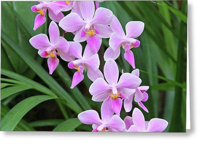 Orchids 15 Greeting Card by Becky Lodes