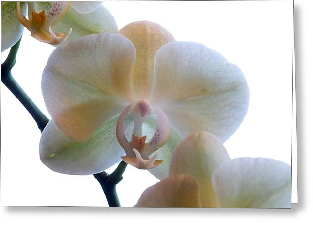 Colorful Orchid Greeting Cards - Orchids 3 Greeting Card by Mike McGlothlen