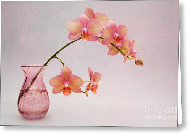 Glass Vase Greeting Cards - Orchids in a Pink Vase Greeting Card by Ann Garrett