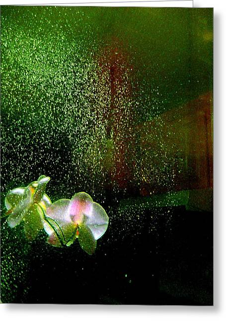 Shirley Sirois   Greeting Cards - Orchids in the Rain Greeting Card by Shirley Sirois