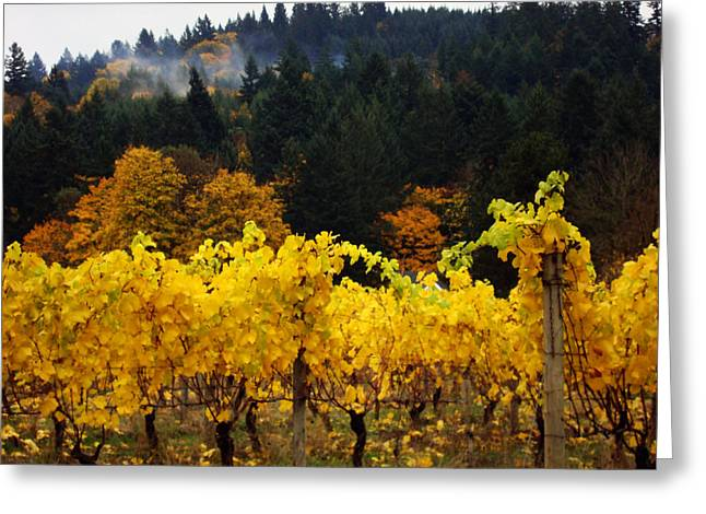 Gold Lime Green Greeting Cards - Oregon Autumn Vineyards Greeting Card by Glenna McRae