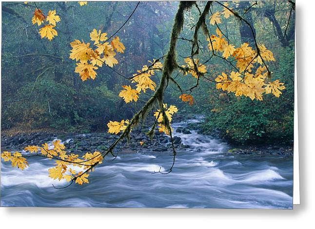 Location Art Greeting Cards - Oregon, Cascade Mountain Greeting Card by Carl Shaneff - Printscapes