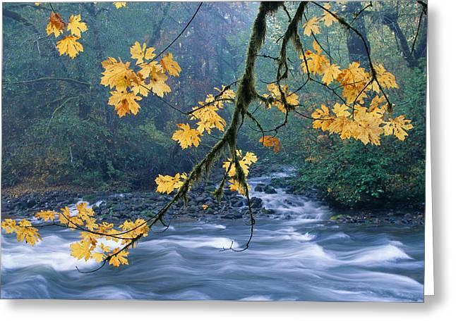 Printscapes - Greeting Cards - Oregon, Cascade Mountain Greeting Card by Carl Shaneff - Printscapes