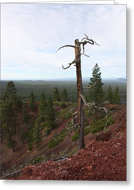 Carol Groenen Greeting Cards - Oregon Landscape - Confused Tree at Lava Butte Greeting Card by Carol Groenen
