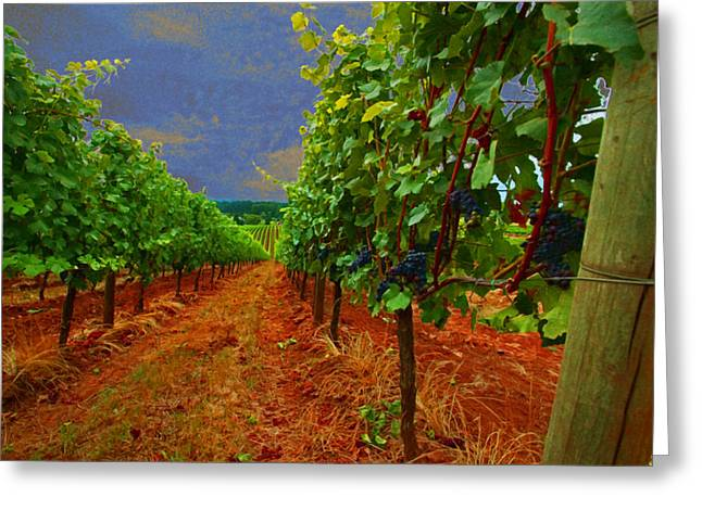 Pinot Digital Art Greeting Cards - Oregon Vineyard Greeting Card by Jeff Burgess