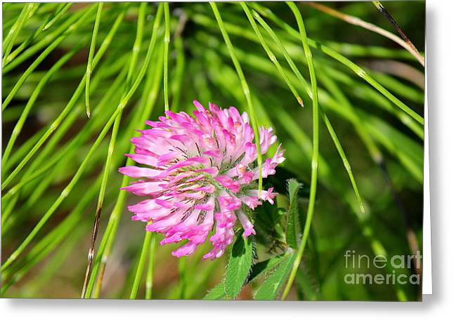 Wildfowers Greeting Cards - Oregon Wildflowers Greeting Card by Allen Sindlinger