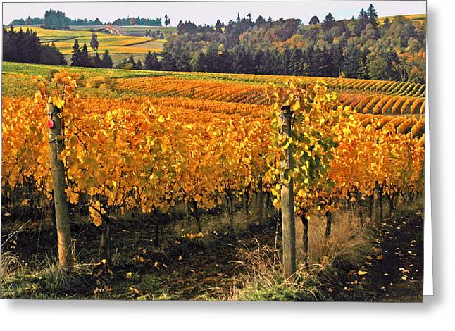 Wine Country. Digital Art Greeting Cards - Oregon Wine Country Greeting Card by Margaret Hood