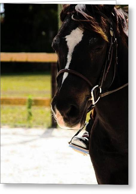 Oreo Photographs Greeting Cards - Oreo the Horse Greeting Card by Jacalyn Highsmith