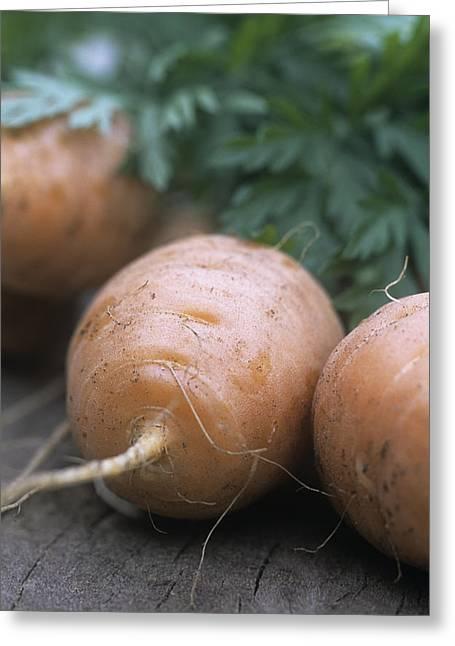 Carota Greeting Cards - Organic Carrots (daucus Carota parmex) Greeting Card by Maxine Adcock
