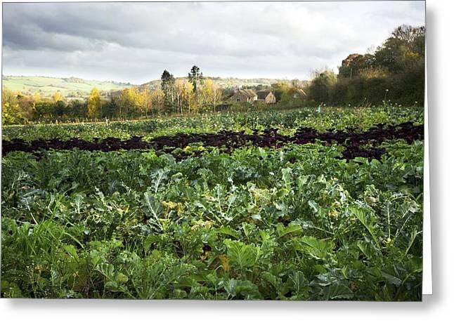 Broccoli Greeting Cards - Organic Farming Greeting Card by Dr Keith Wheeler